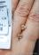 Золотые серьги гвоздики Сердечки 0